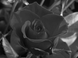A grayscale image